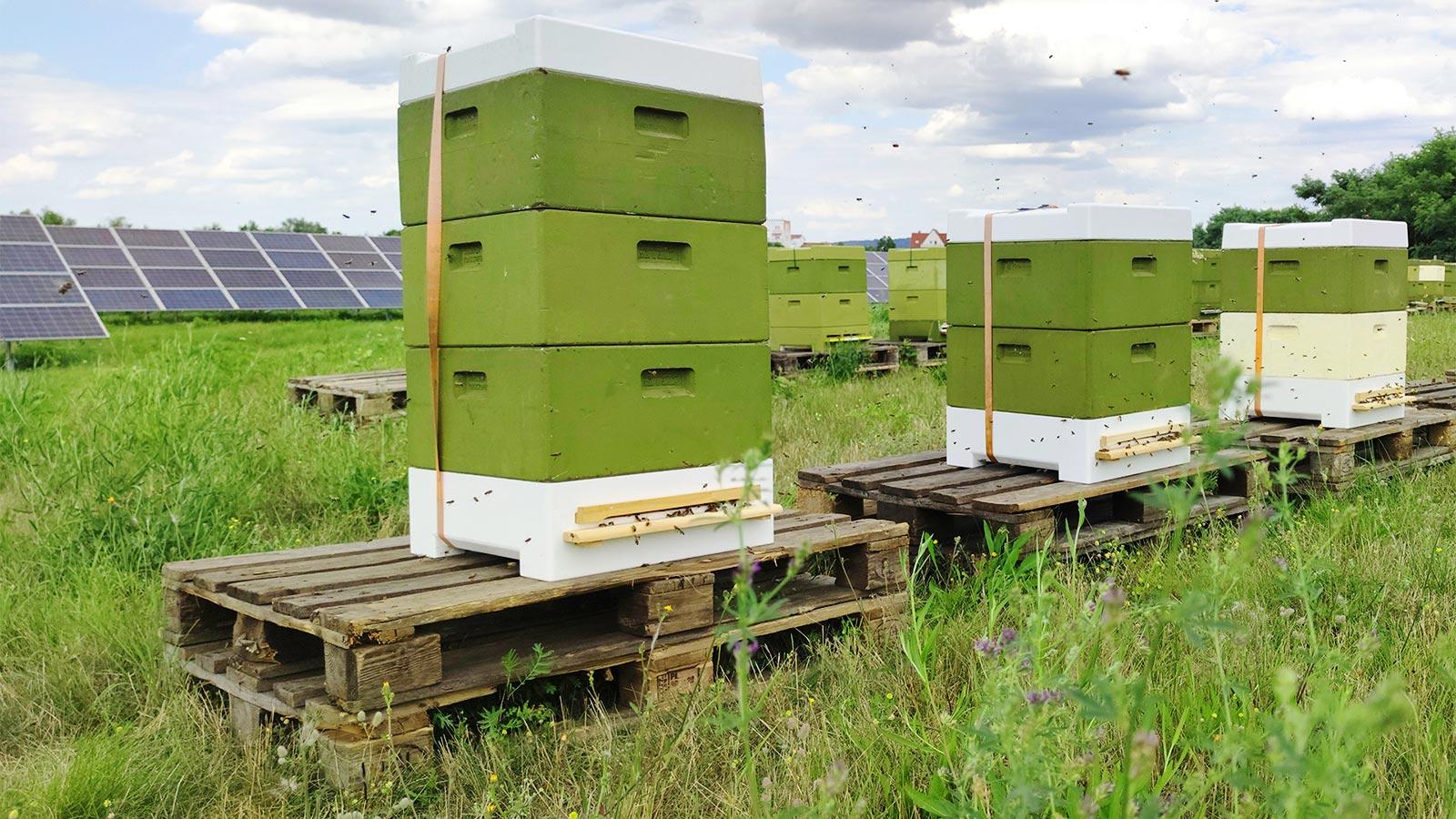 Bienenstöcke auf der Wiese im Solarpark Wurzen